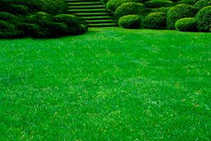 Садово-парковая